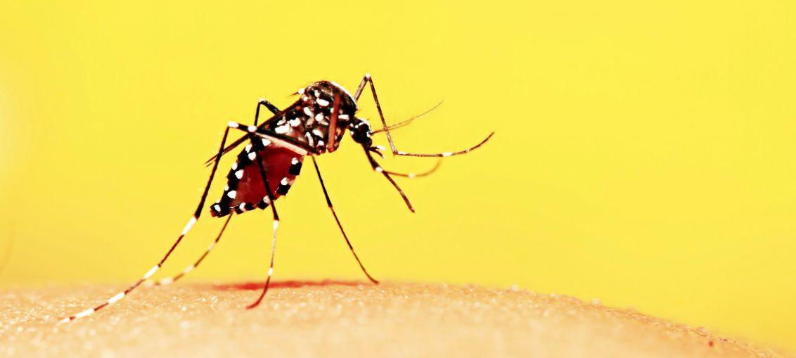 Infectologista - Dúvidas sobre  Zika, Dengue e Chikungunya