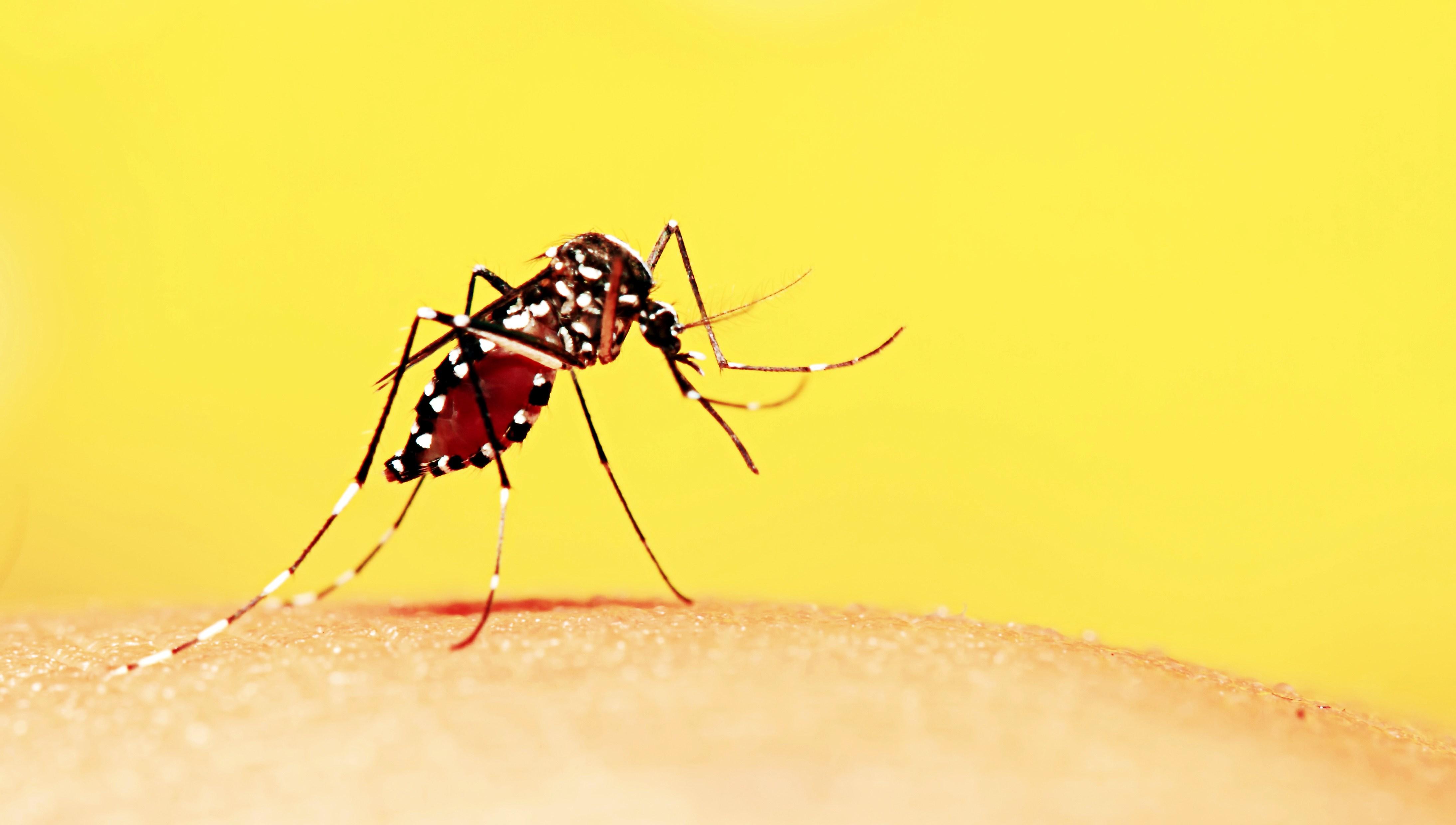Dúvidas sobre  Zika, Dengue e Chikungunya