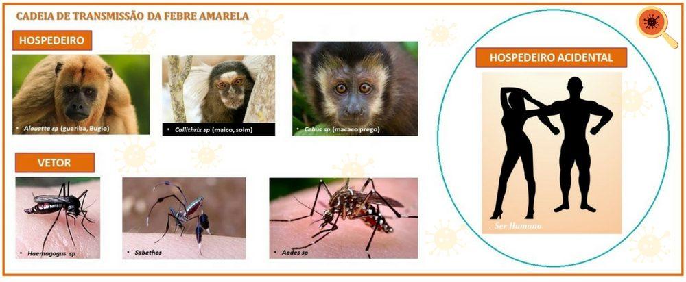 O macaco nos protege contra a Febre Amarela