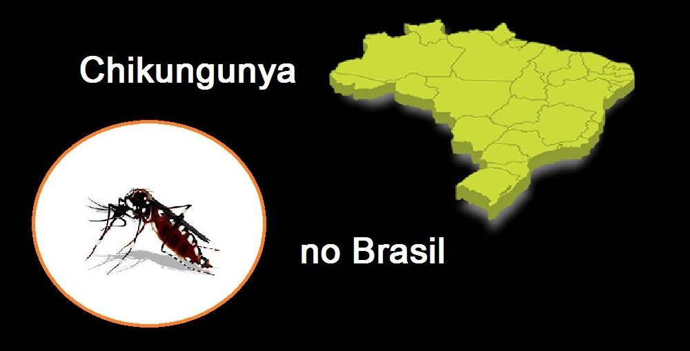 Chikungunya no Brasil - Infectologista SP