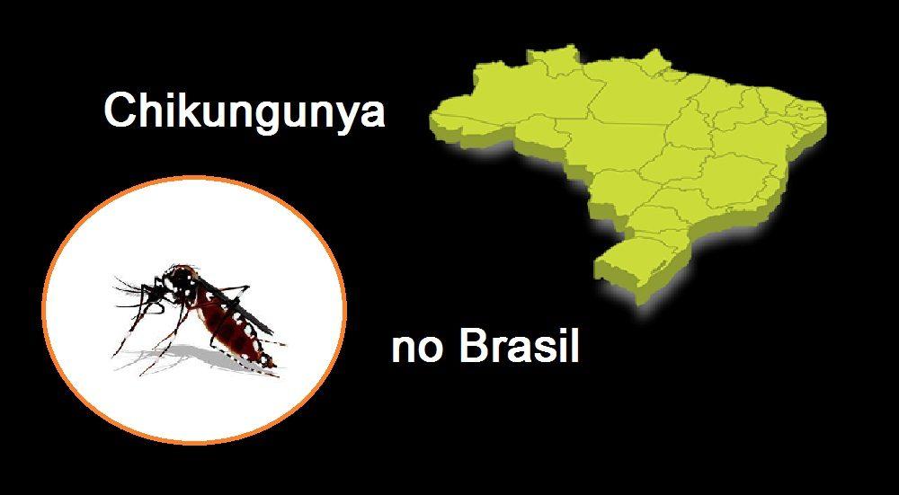 Chikungunya no Brasil: as vítimas seguem aumentando