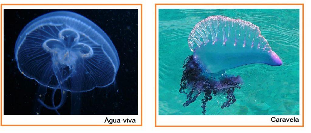 Queimaduras por águas-vivas