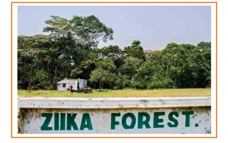 Floresta Zika