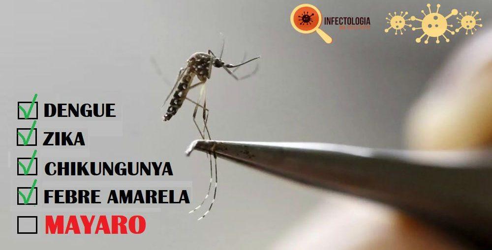 Infectologista - Mayaro. O novo vírus que pode se espalhar pelo Brasil