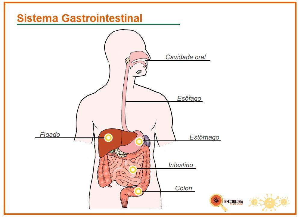 Probióticos e seus efeitos no sistema imune