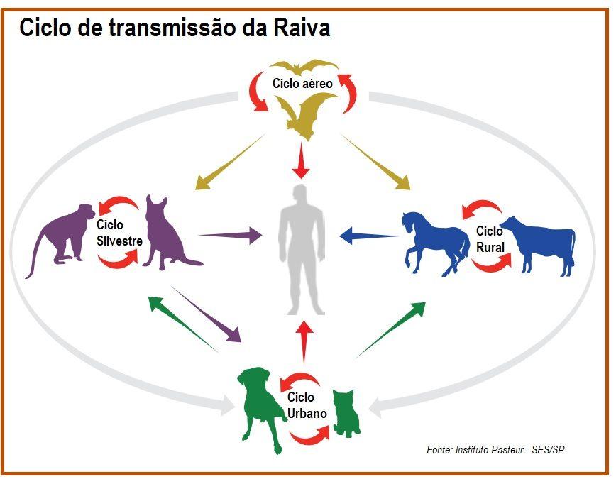 Vírus da Raiva: infecção mais letal do mundo
