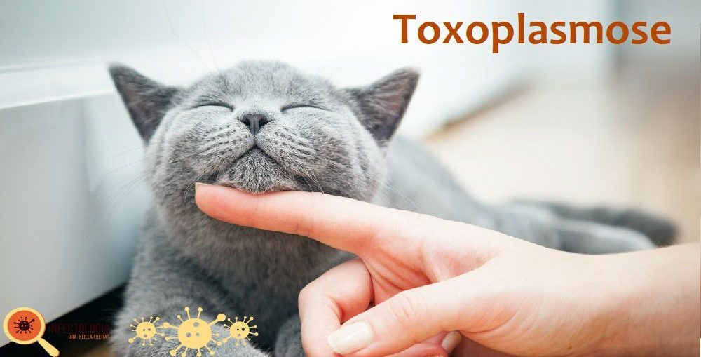toxoplasmose - Infectologista SP