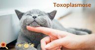 Toxoplasmose: saiba mais