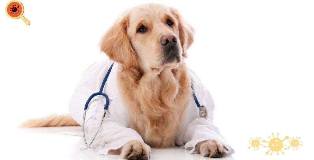 Infectologista - Animais em instituições de saúde