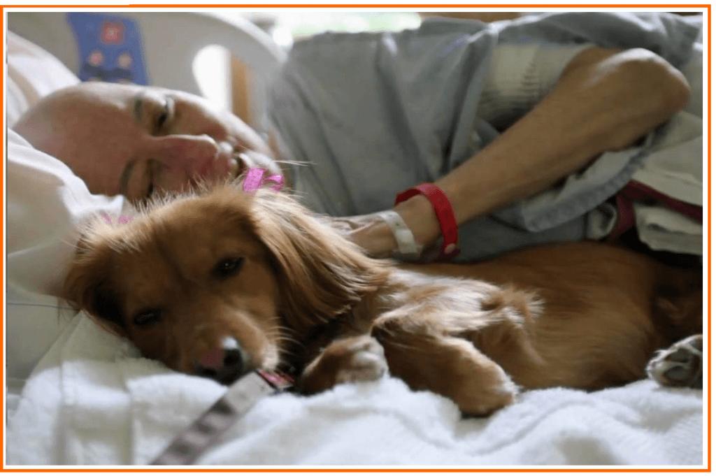 Animais em instituições de saúde