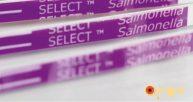 Saiba mais sobre a salmonella