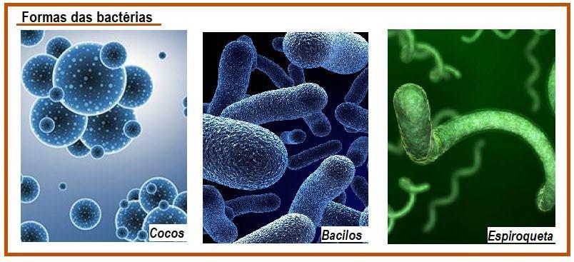 O que são bactérias